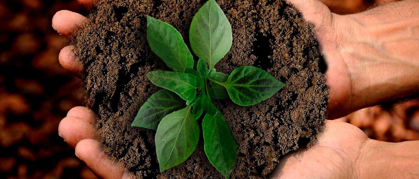 Marcas sustentables, más allá de la causa ambiental